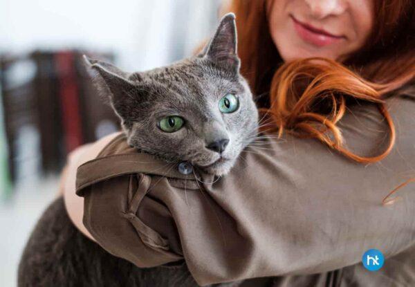 Cara Mengatasi Kucing Daire