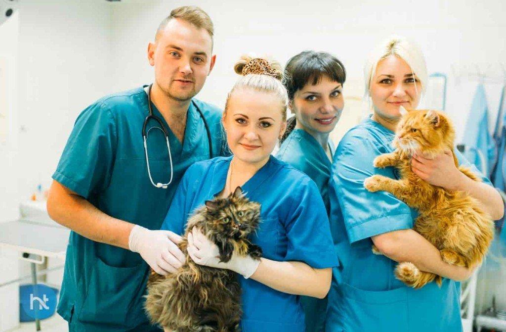 Masalah kesehatan anak kucing 3