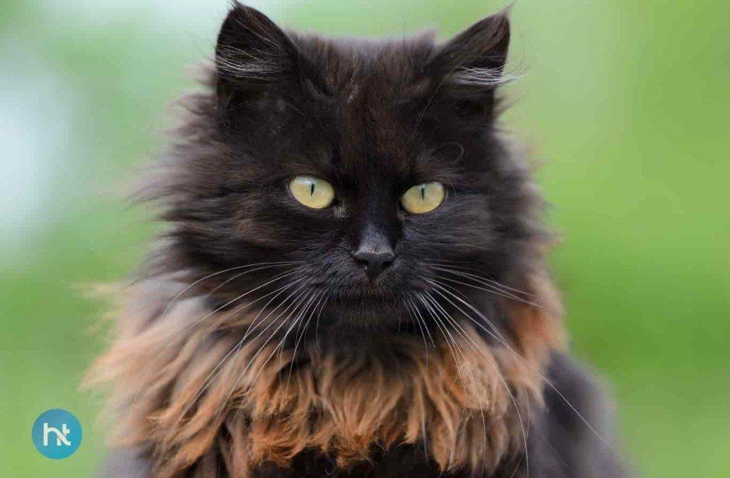 Mitos Kucing Hitam Di Druids