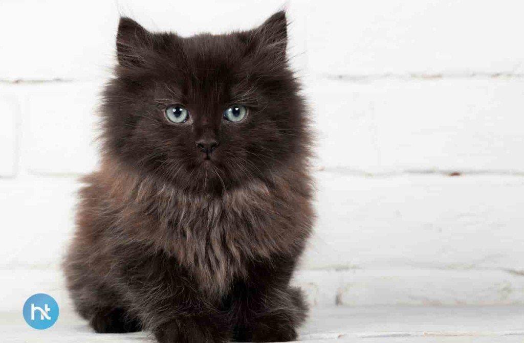 Mitos Kucing Hitam Di Finlandia