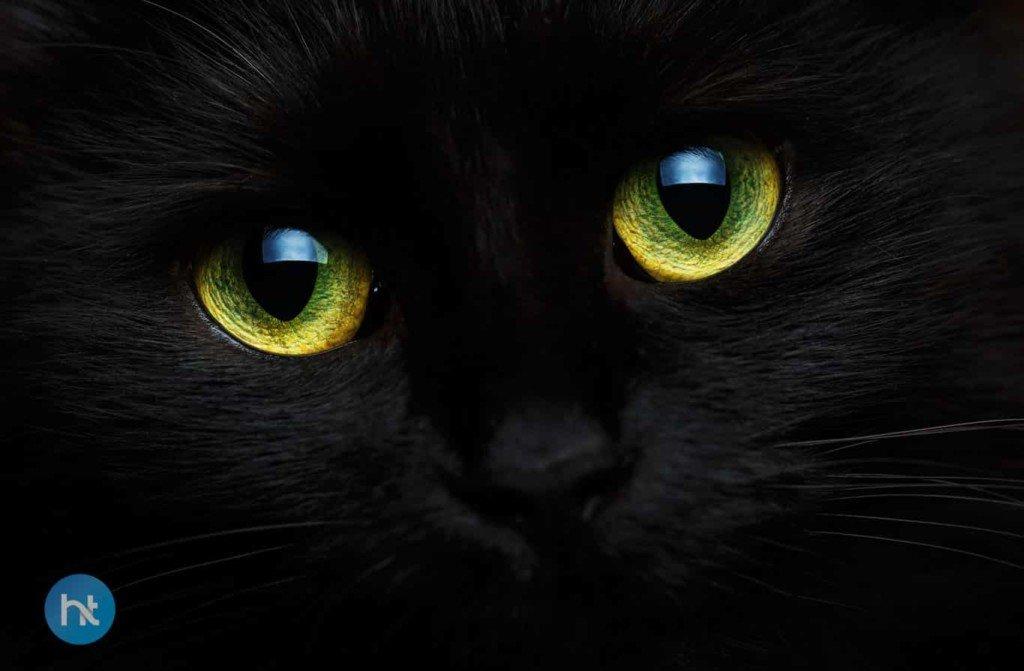 Mitos Kucing Hitam Di Indonesia