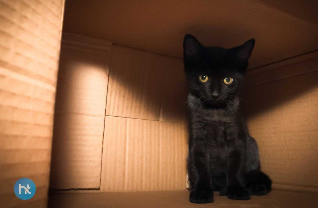 Mitos Kucing Hitam Di Jerman