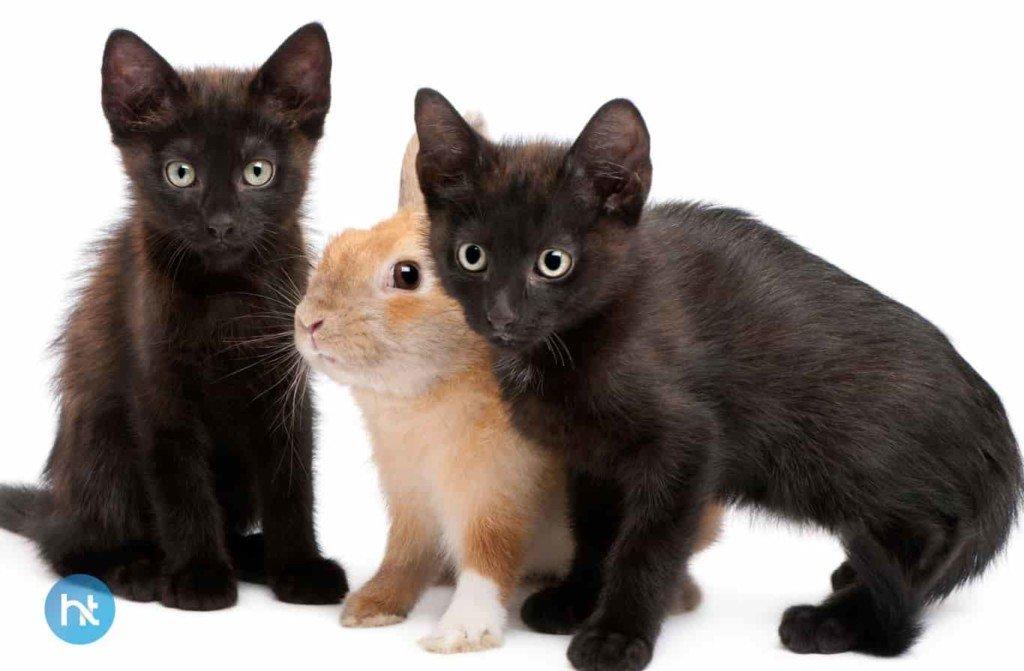 Mitos Kucing Hitam Di Normadia