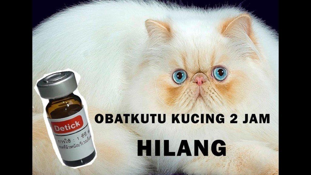 Obat Tetes Anti Kutu/Jamur Untuk Kucing