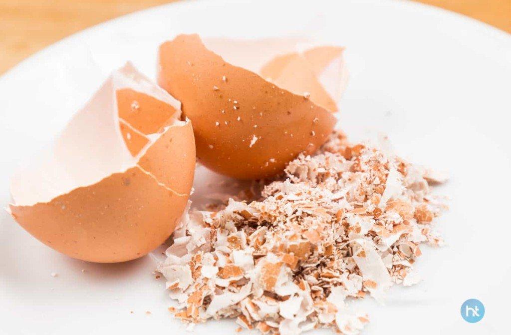 mengusir tokek menggunakan cangkang telur