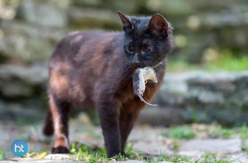 mitos kucing hitam diberbagai negara