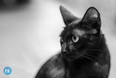 Mitos Kucing Hitam