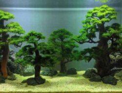 5 Jenis Tanaman Aquascape Yang Tumbuh Tanpa Co2