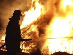 Artikel Kebakaran Hutan