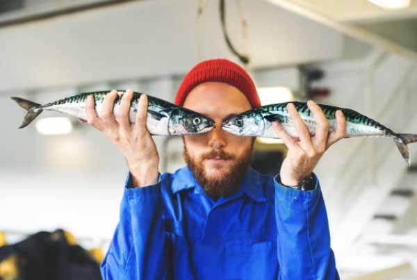 Jenis umpan ikan laut spesial