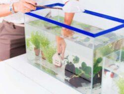 Bikin Aquascape Sederhana! Berikut 5 Tahap Pembuatannya