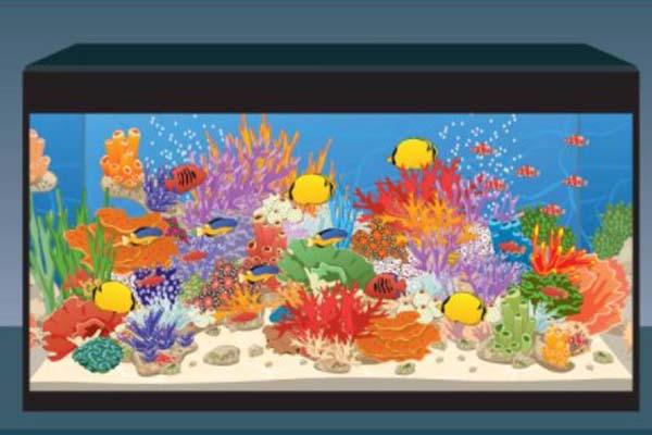 Ikan Hias Air Laut Yang Mudah Dipelihara