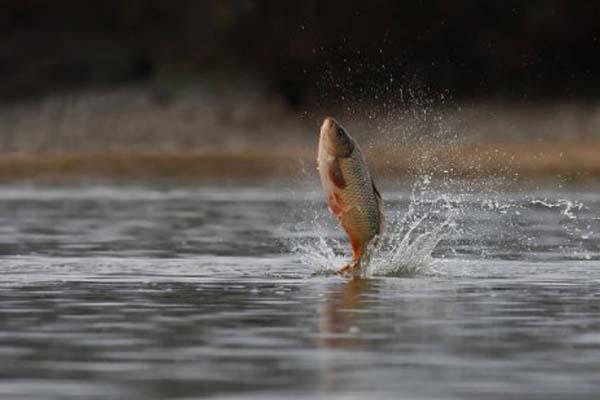 Ikan Karnivora