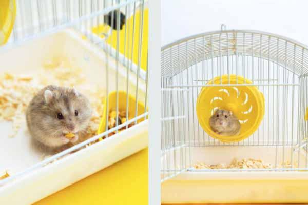 Kandang Hamster 7