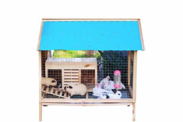 Kandang Hamster 8