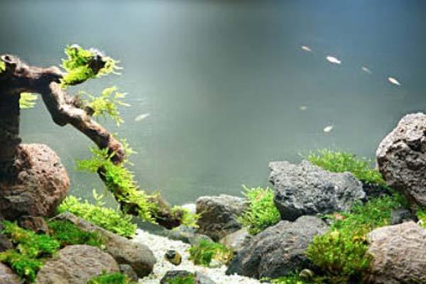 Membuat Aquascape Sederhana