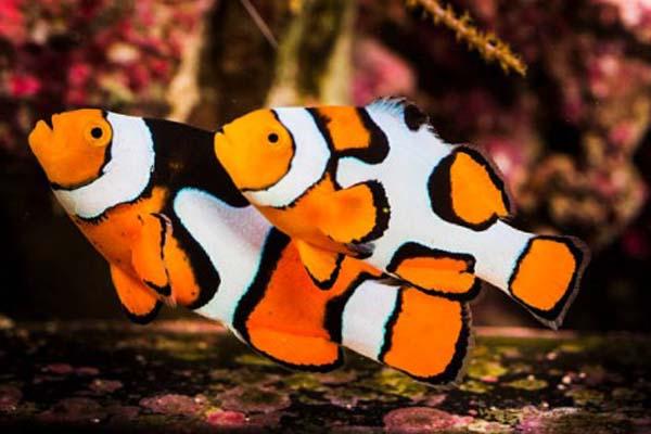 Nemo Picasso