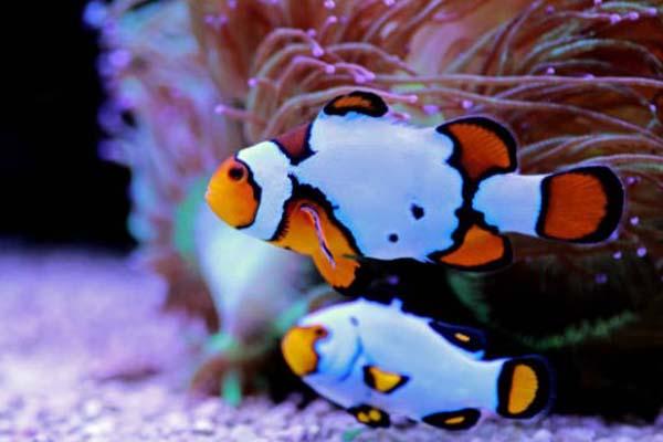 Nemo Snowflake